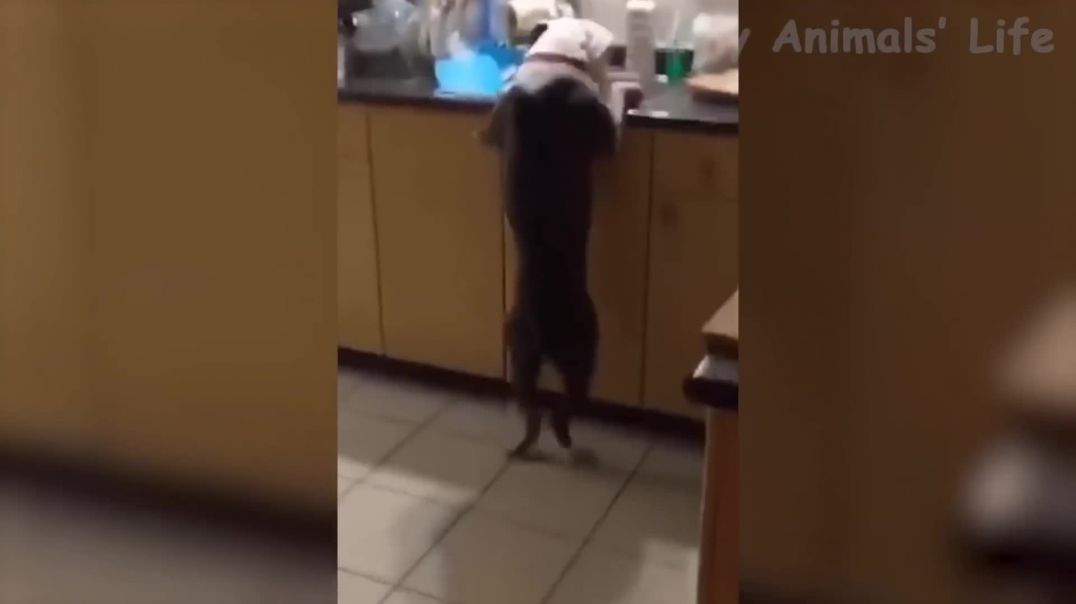 🤣 Funniest 🐶 Dogs and 😻 Cats - Awesome Funny Pet Animals Life Videos 😇_3dcli9i_pvA_1080p.mp4